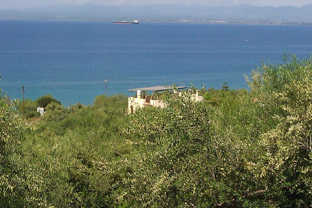 The olive farm with the villa