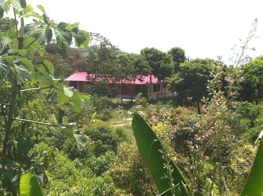 Full naturaleza, canto de pájaros,  sonido del viento, aire puro, tranquilidad y armonía con el entorno.