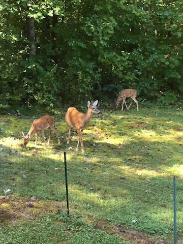 Momma and the fauns come in for a visit.