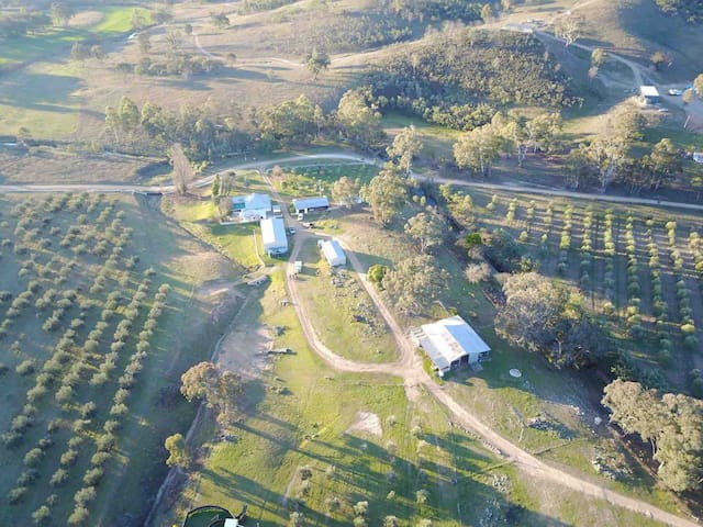 Mudgee NSW Kirwin Farm Stay Pet Friendly Cabin