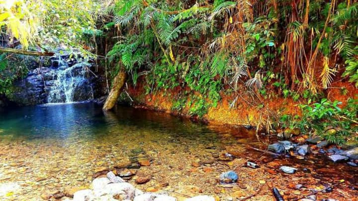 Daintree 4 bdrm shared home with PRIVATE waterfall