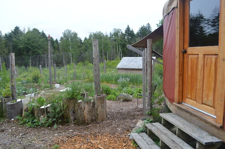 The Little Yurt on Permaculture Homestead