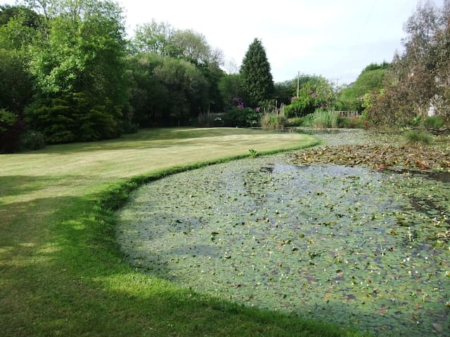 Pond with lilies.