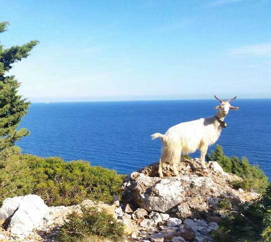 Sardinia Green Paradise