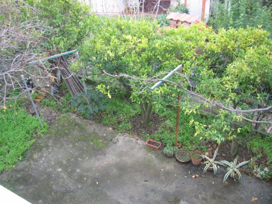 giardino con vigneto