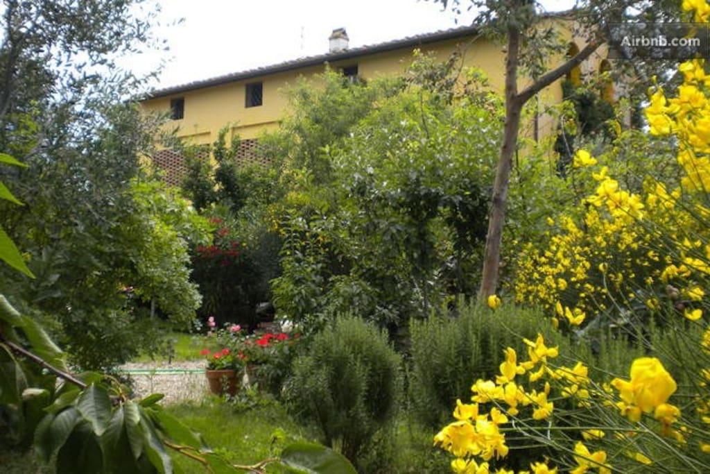 il giardino all'inizio dell'estate