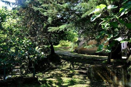 Nel parco Naturale del Cilento - Ceraso - Massascusa  - Bed & Breakfast