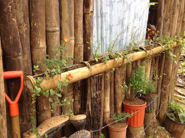 Jungle Healing Retreat Itzamná