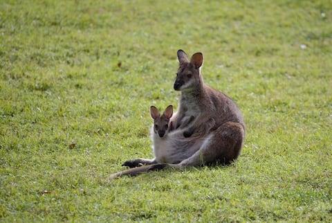Watagan Rainforest Retreat Martinsville (Nouvelle-Galles du Sud)