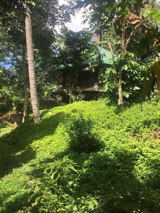 Our house in the middle of lush greenery