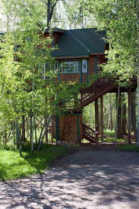 Birdsnest Treehouse #10