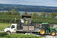 Guests enjoy seeing and learning about harvest time activity in the Finger Lakes at local wineries just up the road.