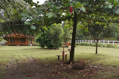Cabin in the Rainforest - Quinta los Tulipanes
