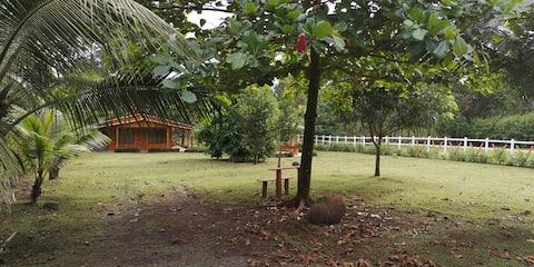 Cabin in the Rainforest - Quinta los Tulipanes