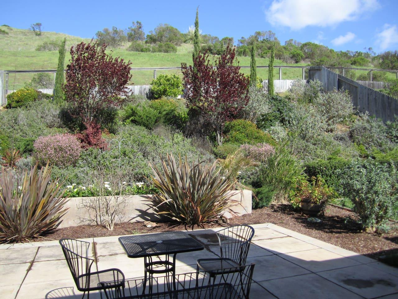 backyard that backs to the regional parks
