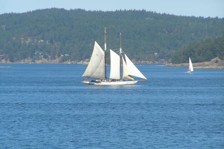 Petite Amour - Friday Harbor