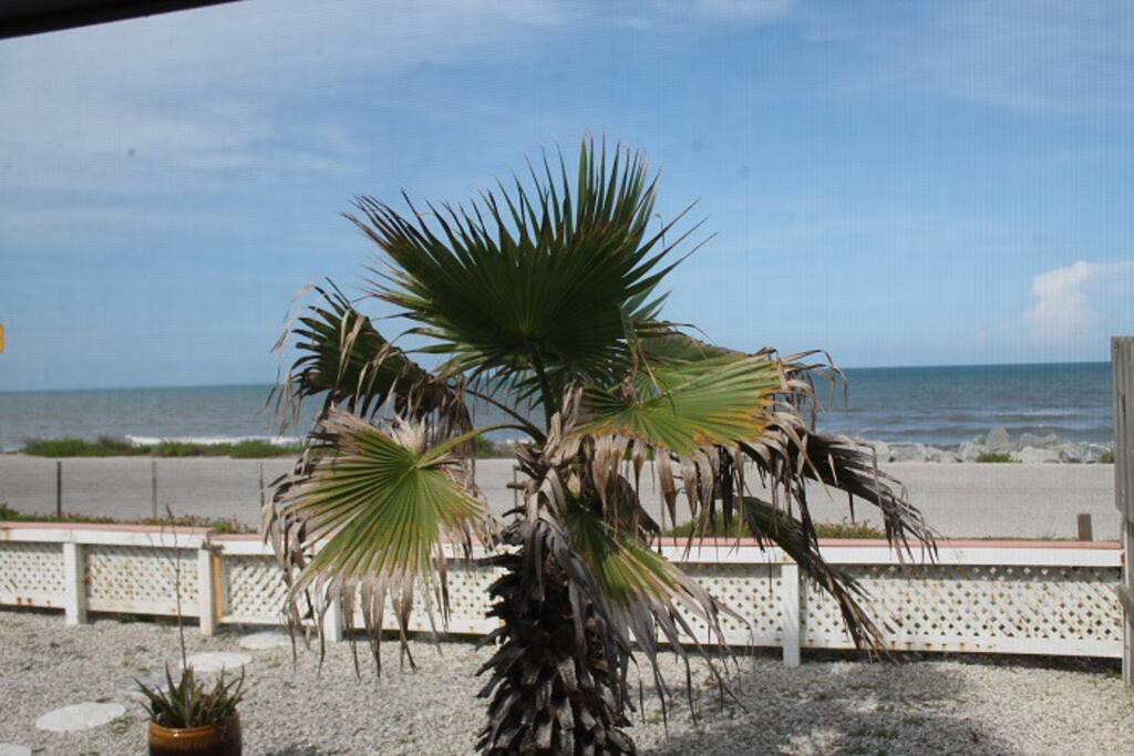 Beach Haven Pet Friendly Ocean Front Houses For Rent
