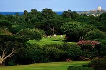 Golf Club, Is Molas
