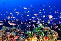Immersioni subacque