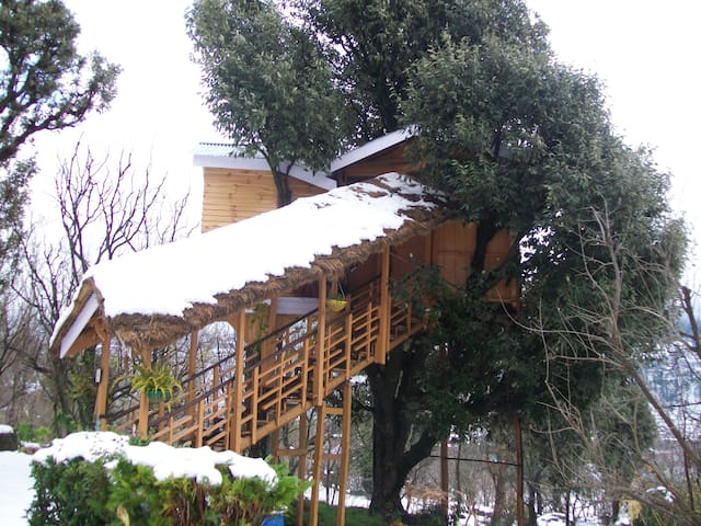 Beautiful treehouse in Manali - Katrain - Cabana en un arbre