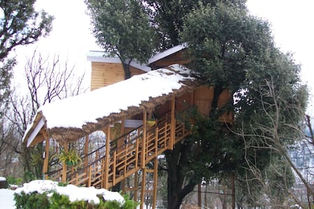 Beautiful treehouse in Manali - Katrain