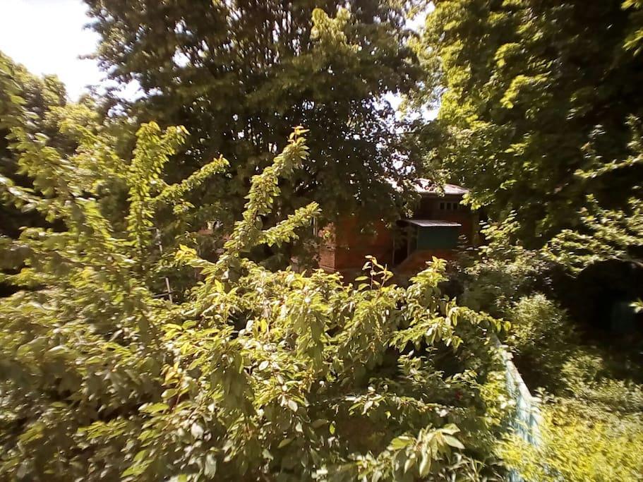 Le jardin jouxte le parc de l'internat du lycée