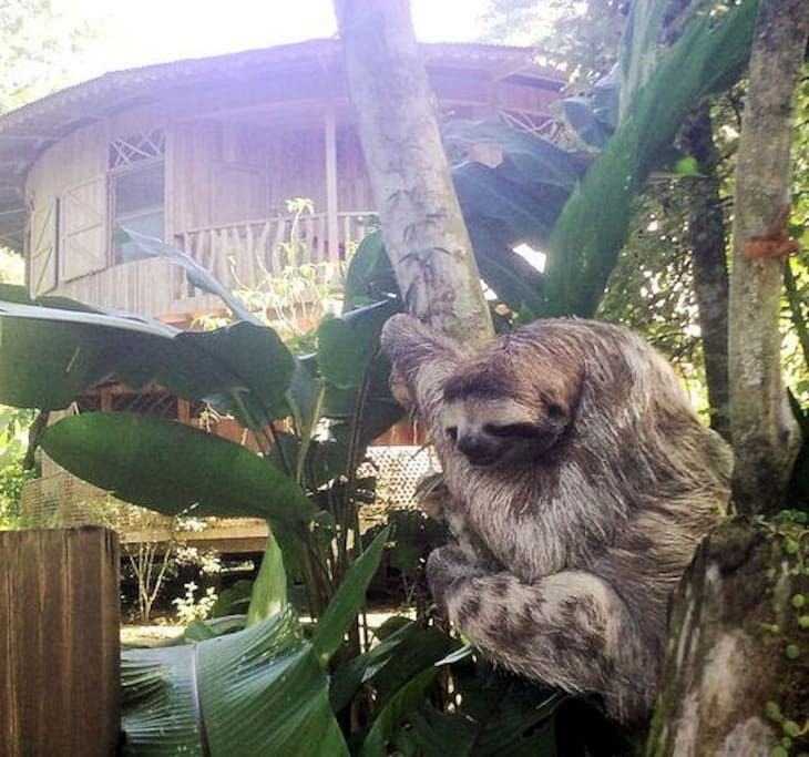 Even sloths are attracted to our super-laid-back, all-natural jungle garden...