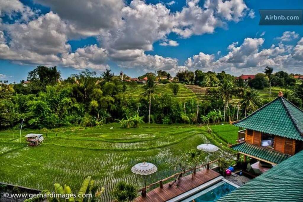 Exotische balinesische zimmer im reisfeld boutique for Exotische hotels