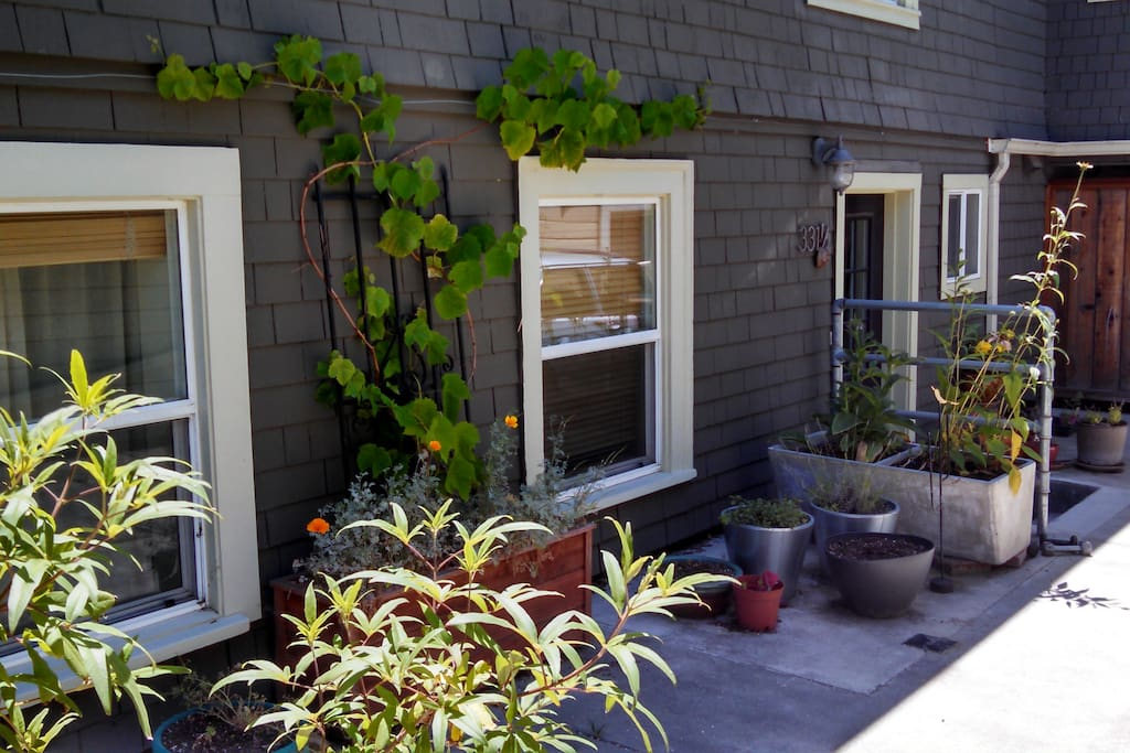 Our front door, framed by numerous local herbs and flowers and a grape vine climbing between the windows