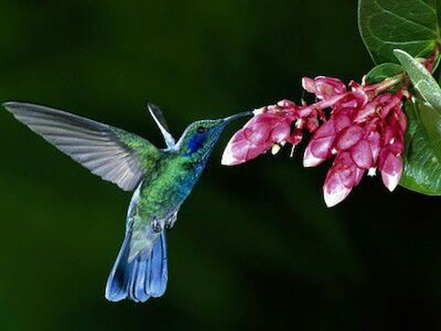The hummingbird and her friend - La Fortuna - Andere