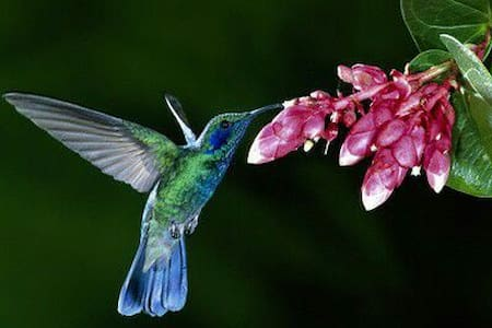 The hummingbird and her friend - La Fortuna - Outros