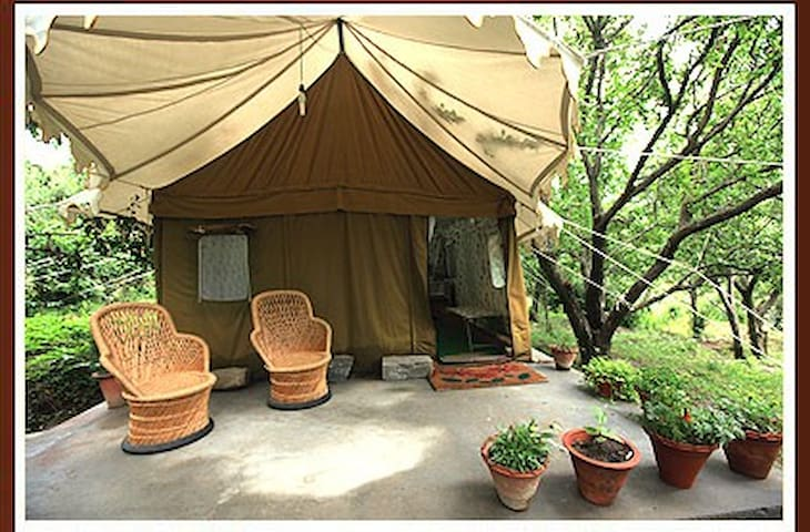 Exotic swiss tent house in Manali - Katrain - Teltta