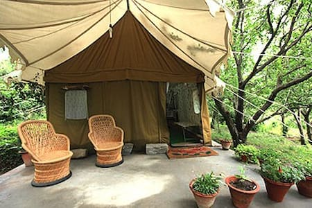 Exotic swiss tent house in Manali - Katrain - Khemah