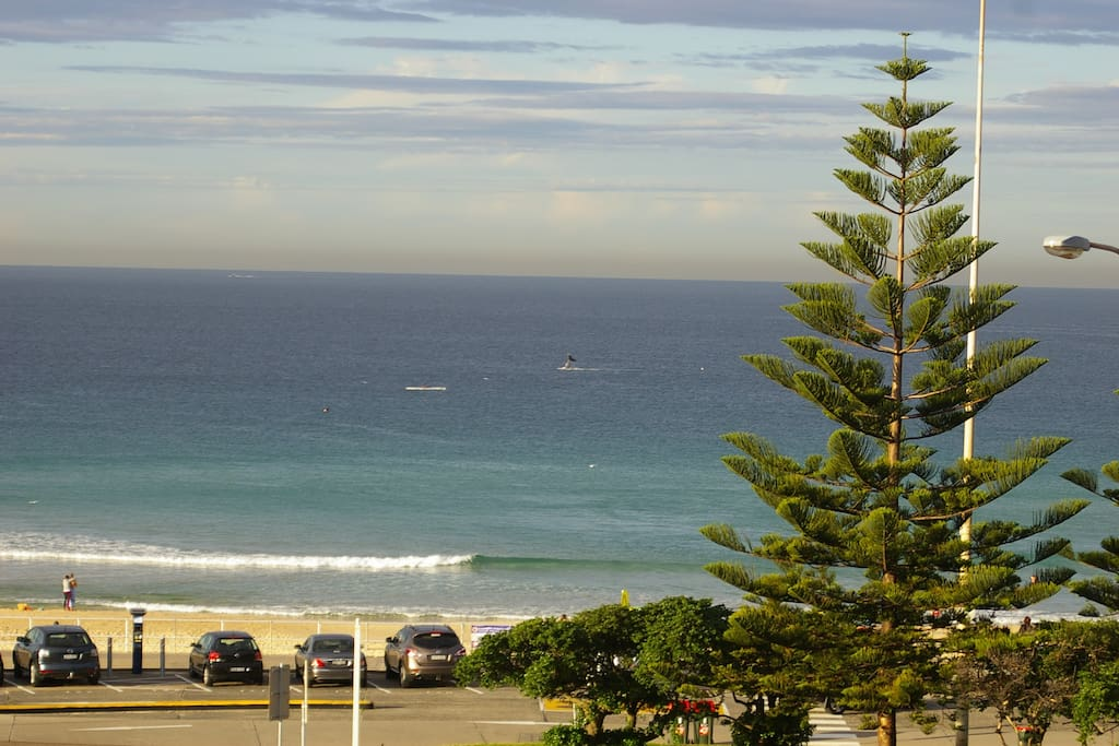 Believe it or not - this was a whale we spotted one morning from the lounge room in mid-May 2014