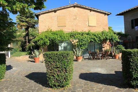 Sienna -Vignano40/2