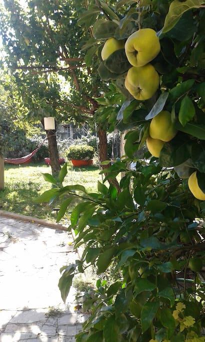 zona relax e frutta fresca di stagione
