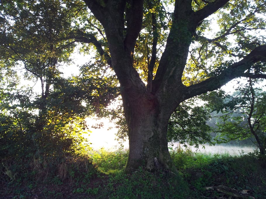 Open the door in the morning and watch the sun rise through the old oak tree