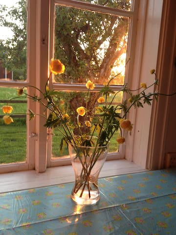 Eveningsun entering the kitchen