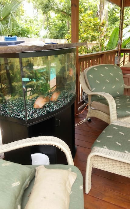 Tropical fish reside in our outdoor gazebo adding to the serenity.