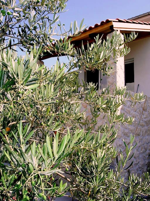 House exterior: Dalamtian stone and olive trees