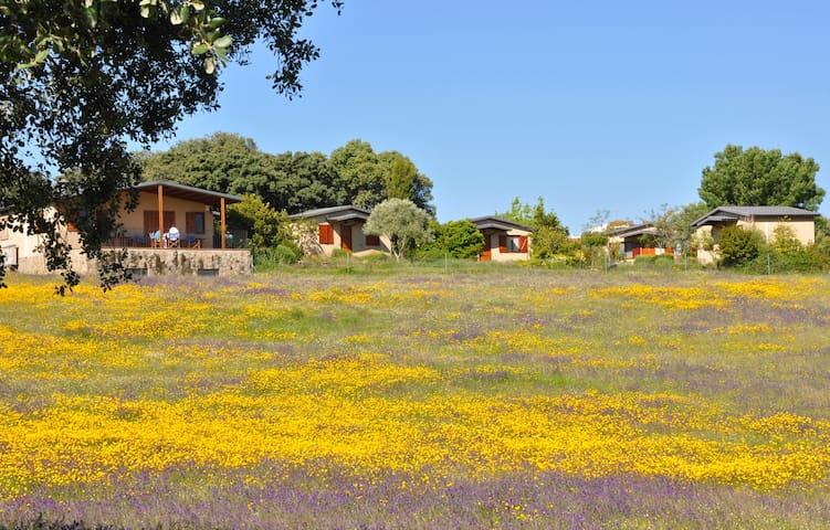 La Cerca del Alcorque  alojamiento y restaurante - Casas de Belvís - Bed & Breakfast