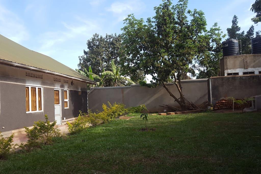 Backyard with view at avocado tree