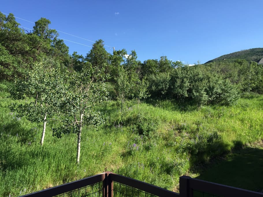 glenwood springs buddhist singles Property search full mls search  single family condo/townhouse lots & land farm/ranch  glenwood springs, colorado 81601 (970) 945-1010.