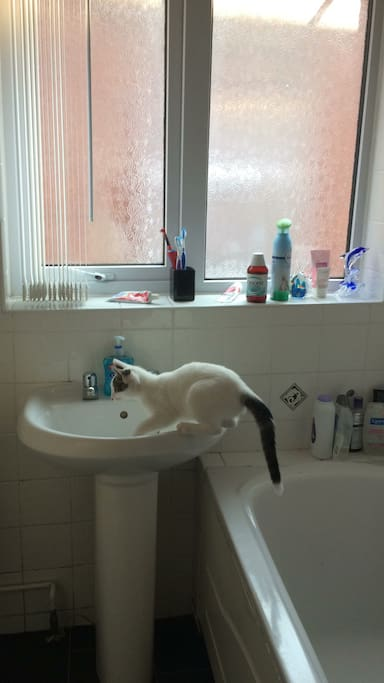 Our cat was being a monkey and wanted a bath!