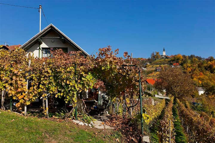 Cottage with the surrounding vineyards
