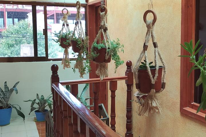 Rincón Crassulaceae a 7 min del centro de Huasca