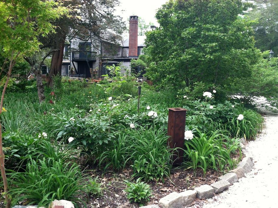 Spring 10,000 daffodils