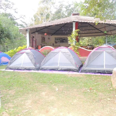 Camping Tents in Dandeli Forest - Full Board Included