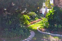 Front path leads to Orchid Tree & beautiful flowers, landscape