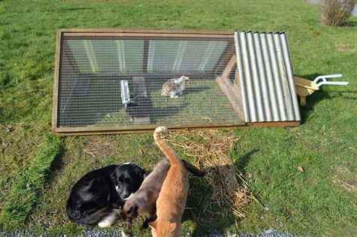 Les lapins, les chats, la chienne...
